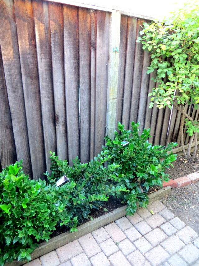 Landscaping with Hedges startwithfourwalls.com