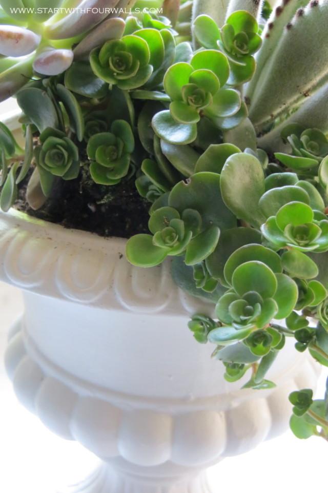 DIY Succulent Urn startwithfourwalls.com